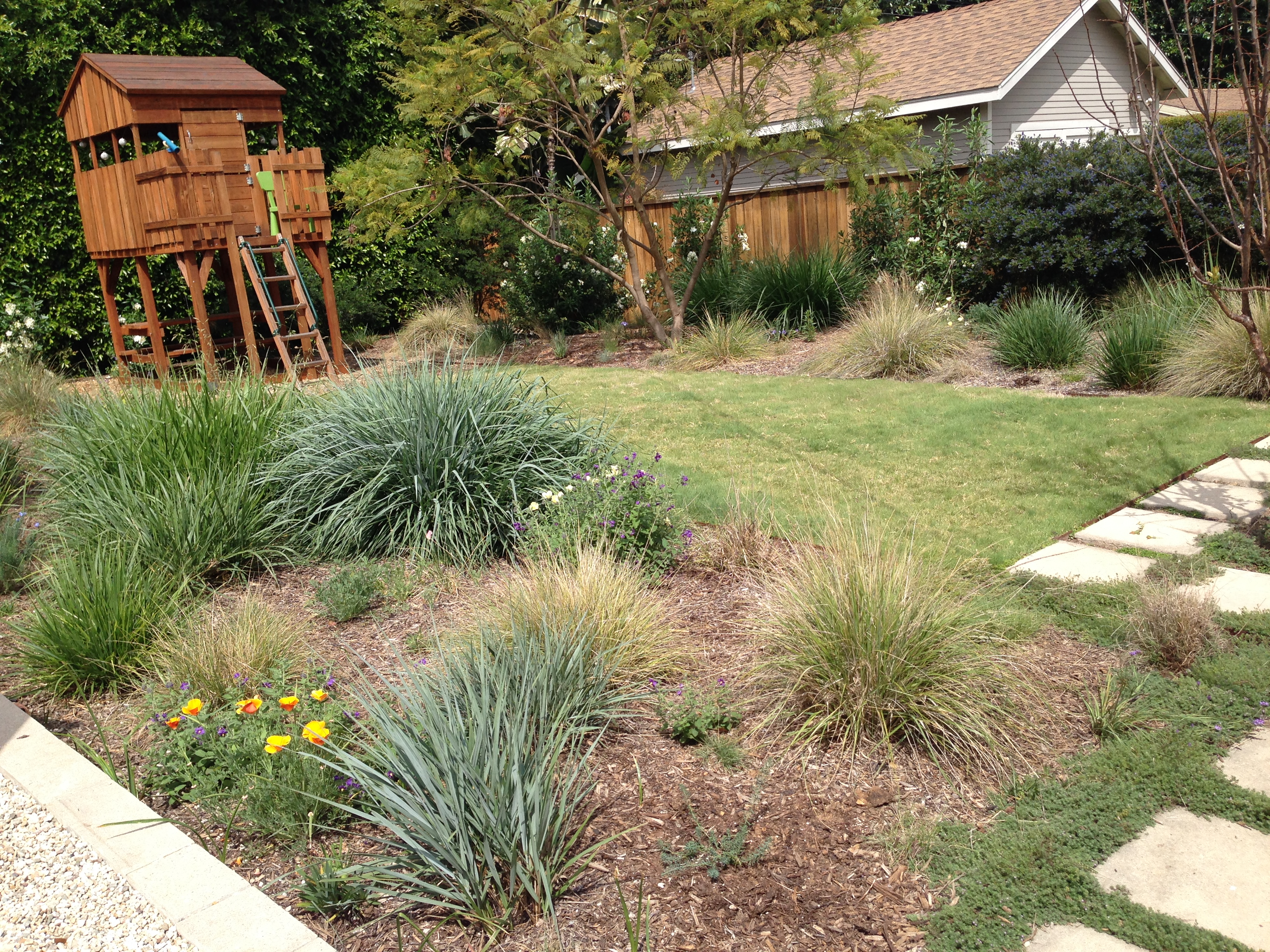 Go Native With Drought Tolerant Grass